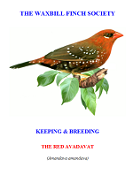 front cover featuring image of a red avadavat.